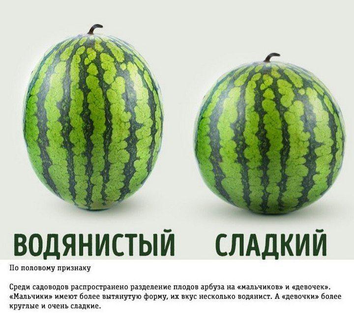 Как правильно выбирать арбуз (3)