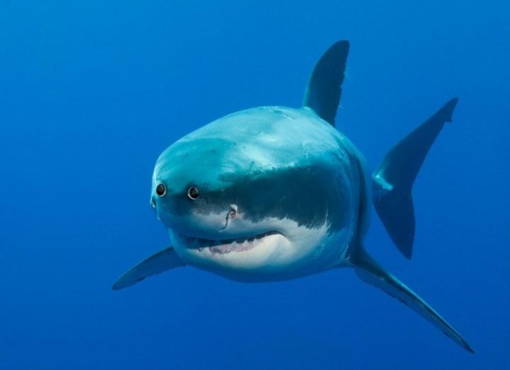 Как бы выглядели животные, если бы у них глаза располагались спереди (2)