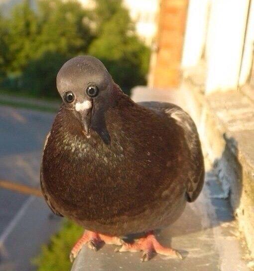 Как бы выглядели животные, если бы у них глаза располагались спереди (3)