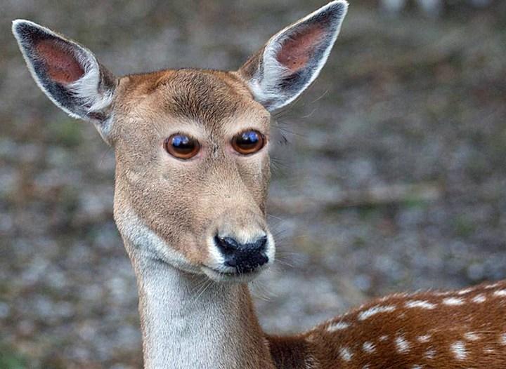 Как бы выглядели животные, если бы у них глаза располагались спереди (4)