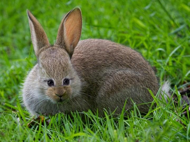 Как бы выглядели животные, если бы у них глаза располагались спереди (5)