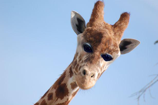 Как бы выглядели животные, если бы у них глаза располагались спереди (7)