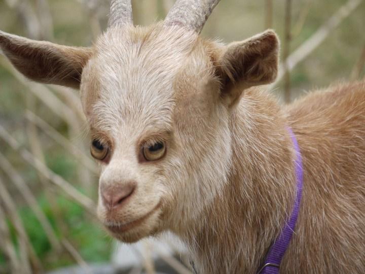 Как бы выглядели животные, если бы у них глаза располагались спереди (8)