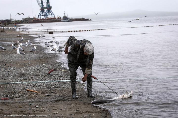 Рыбалка по Чукотски (4)