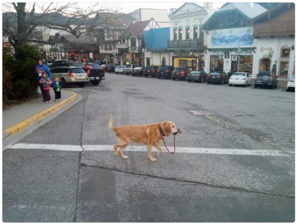 Когда хозяина нет рядом, а тебе очень нужно перейти через дорогу