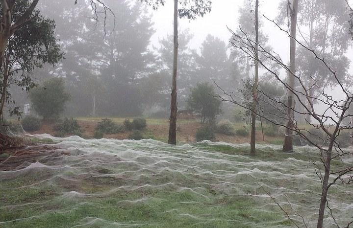 Австралия в паутине (5)
