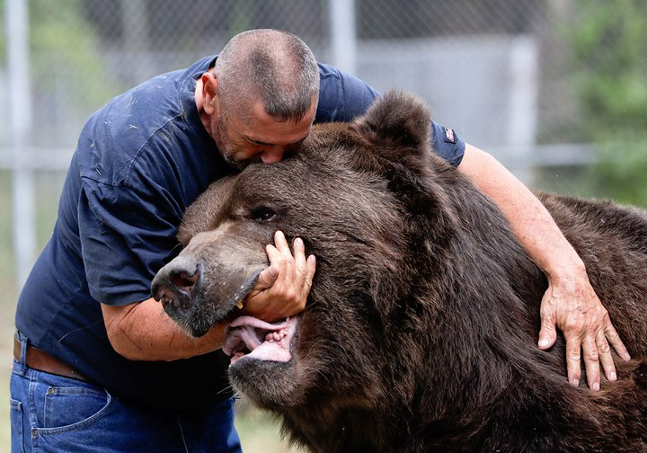 Необычная дружба с огромным медведем (3)