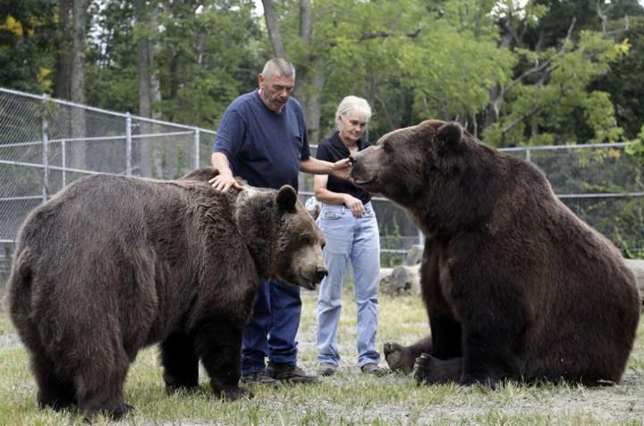 Необычная дружба с огромным медведем (4)