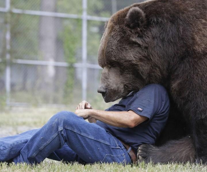 Необычная дружба с огромным медведем (5)
