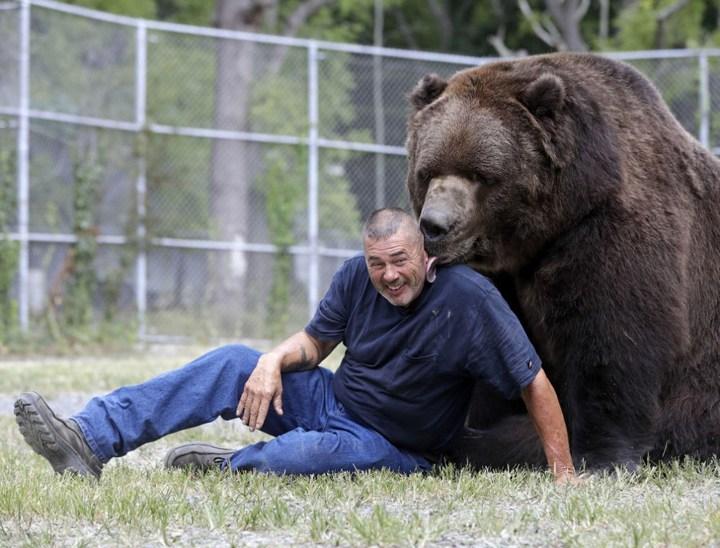 Необычная дружба с огромным медведем (7)