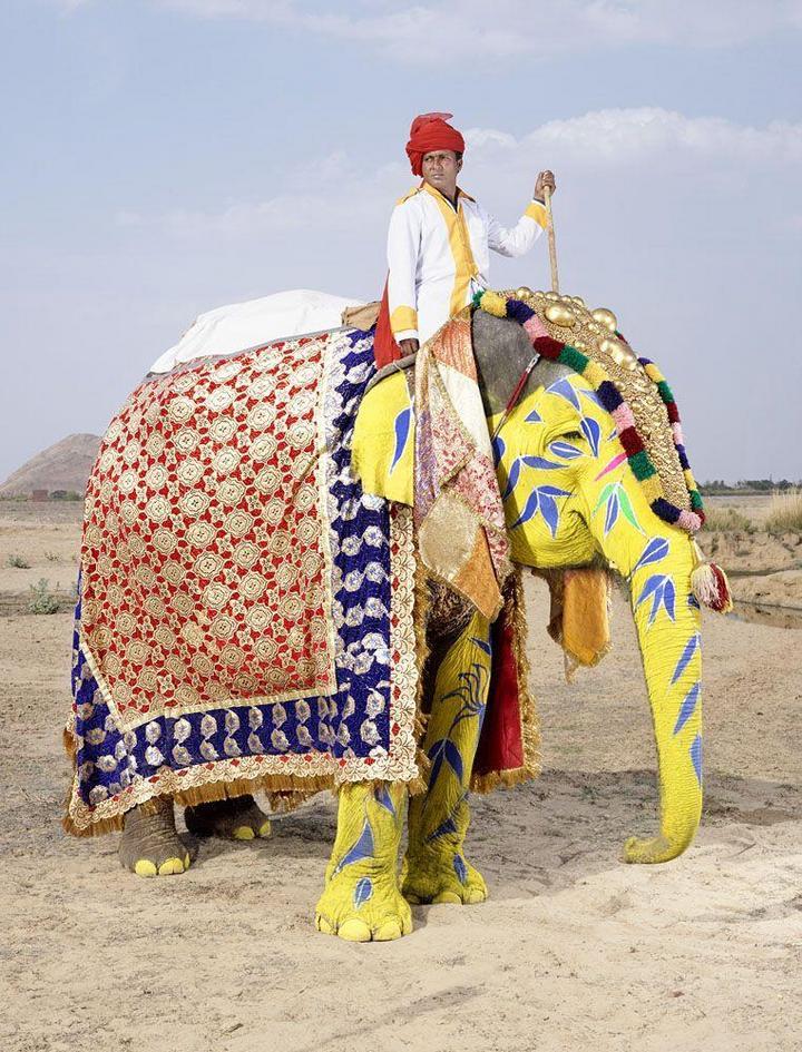 """""""Тюнинг"""" слона по-индийски (9)"""