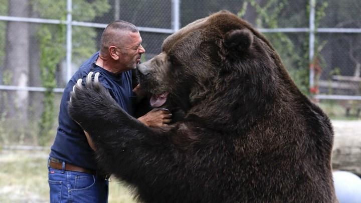 Необычная дружба с огромным медведем (10)
