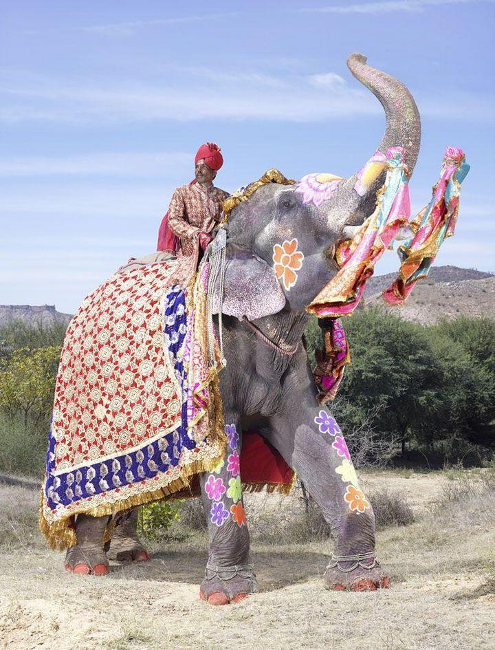 """""""Тюнинг"""" слона по-индийски (14)"""