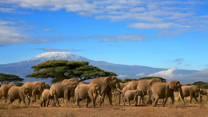 Интересные факты о Танзании (1)