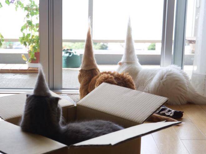 Шляпки для кошек из собственной шерсти (1)
