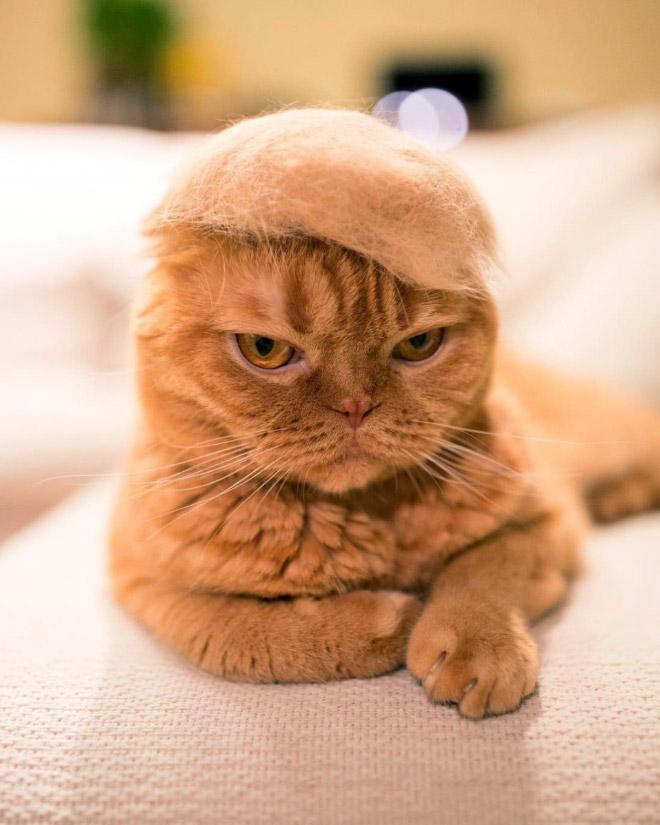 Шляпки для кошек из собственной шерсти (2)