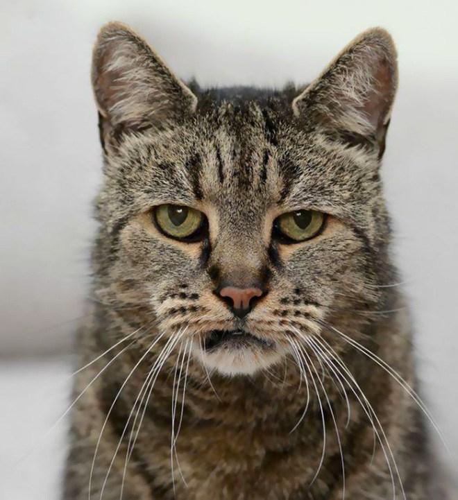Самая старая в мире кошка отметила 31-й день рождения (2)