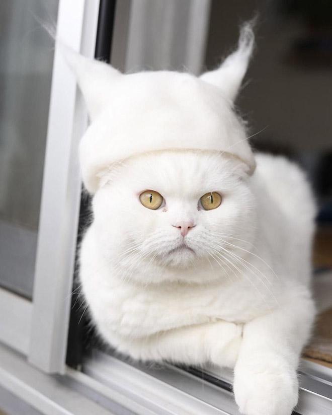 Шляпки для кошек из собственной шерсти (4)