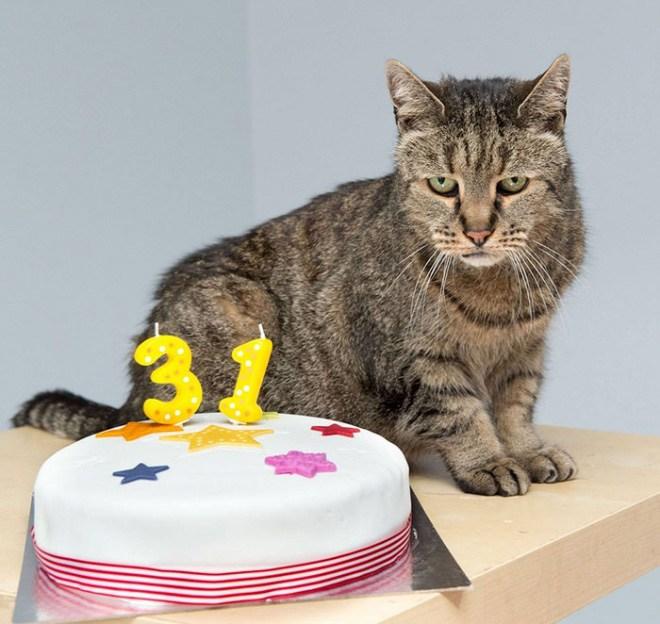 Самая старая в мире кошка отметила 31-й день рождения (4)