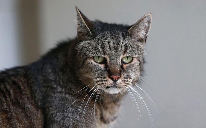 Самая старая в мире кошка отметила 31-й день рождения (5)