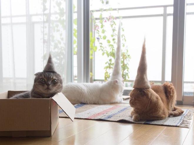 Шляпки для кошек из собственной шерсти (6)