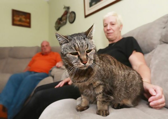 Самая старая в мире кошка отметила 31-й день рождения (7)