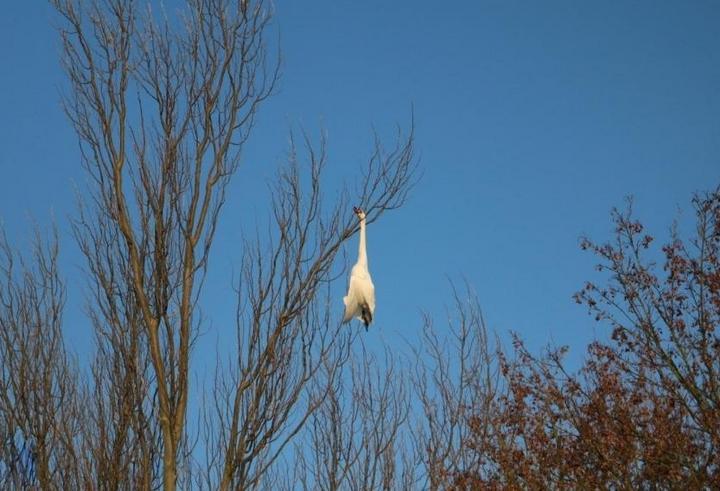 Птичку жалко (2)