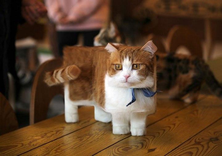 Фото животных в стиле Minecraft (1)