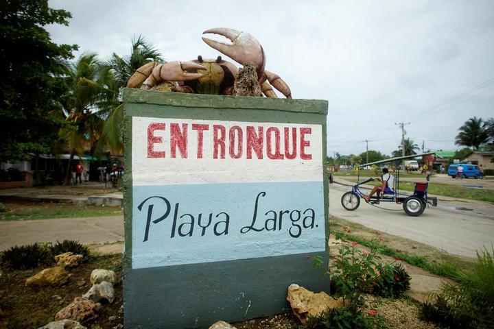 На Кубе началась сезонная миграция крабов (10)