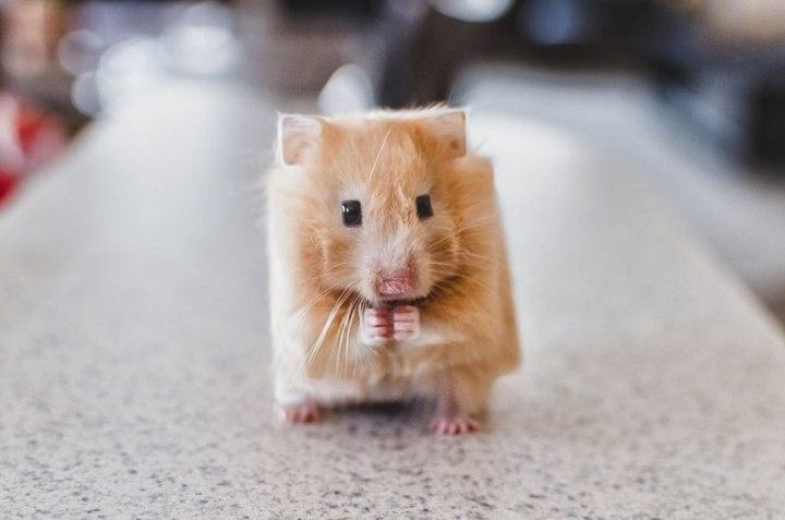 Фото животных в стиле Minecraft (12)