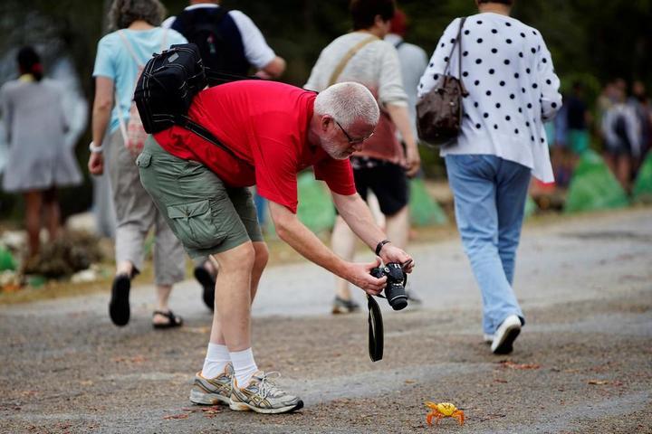 На Кубе началась сезонная миграция крабов (5)