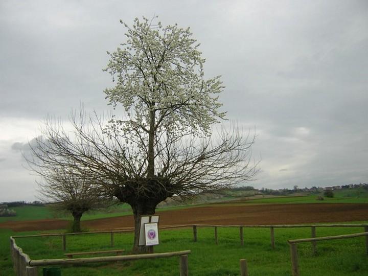 Дерево, растущее на верхушке другого дерева