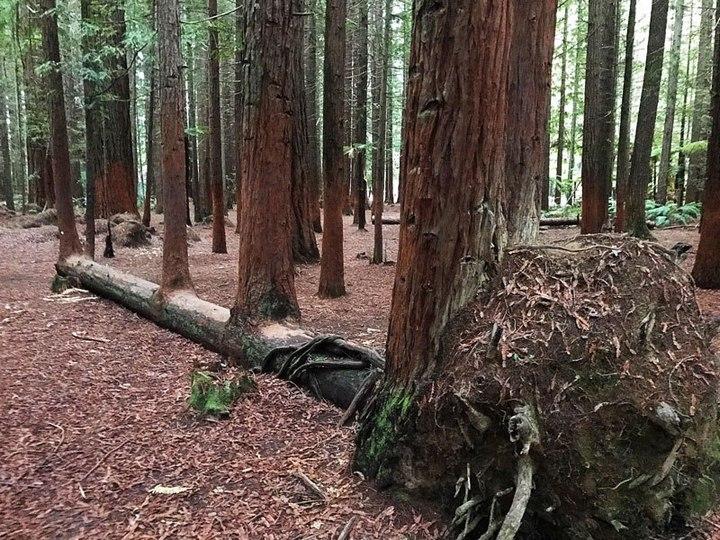 """10 """"крутых"""" деревьев, которые отказались умирать (2)"""