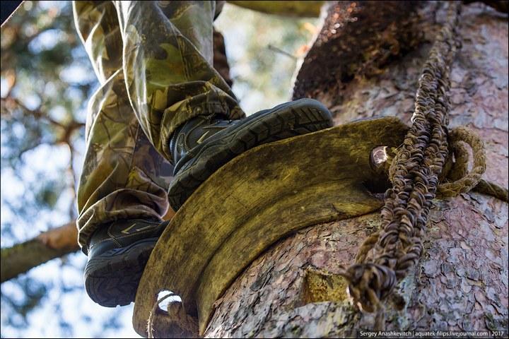 Как в Башкирии добывают мед диких пчел (5)
