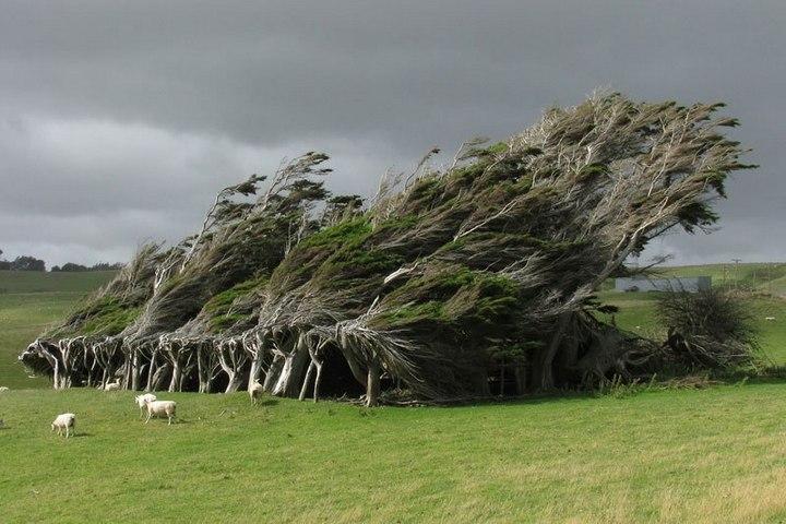 """10 """"крутых"""" деревьев, которые отказались умирать (6)"""