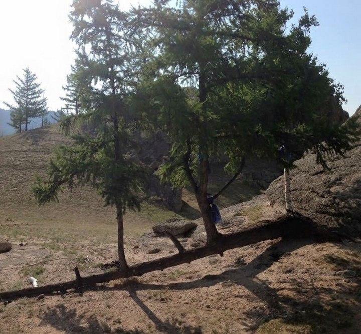 """10 """"крутых"""" деревьев, которые отказались умирать (7)"""