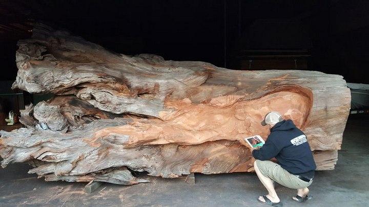 Превращение корня дерева в гигантского осьминога (2)