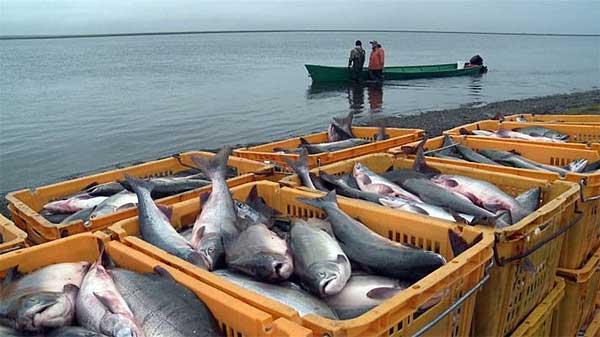 Интересные факты о Азовском море (4)