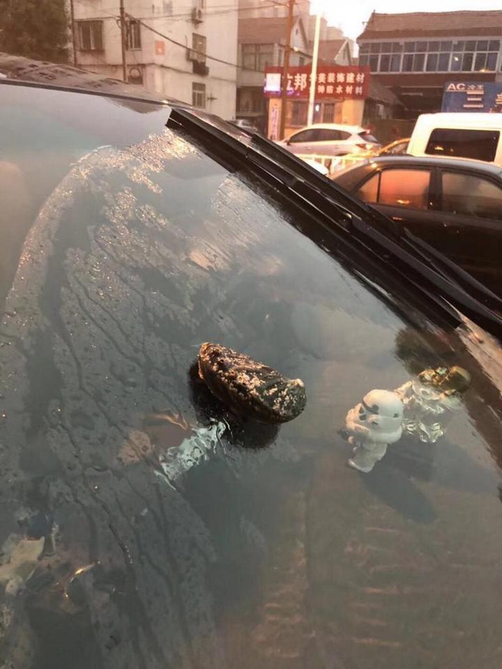 Тайфун над Циндао в Китае рассыпал морских животных (5)