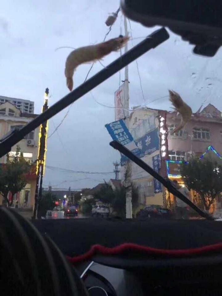 Тайфун над Циндао в Китае рассыпал морских животных (6)