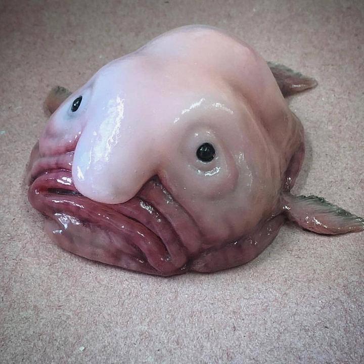 Монстры морских глубин (24)