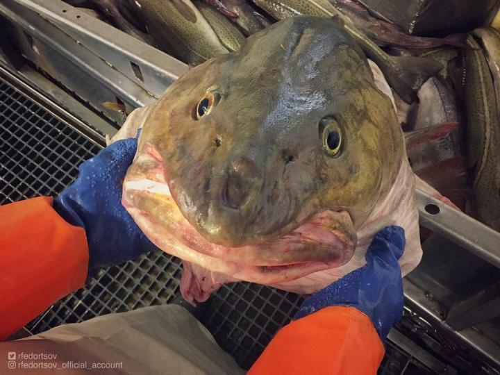 Монстры морских глубин (15)