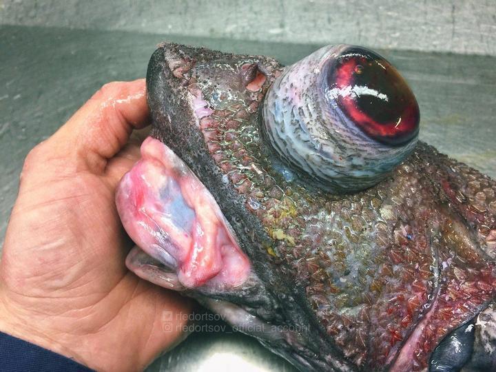 Монстры морских глубин (2)