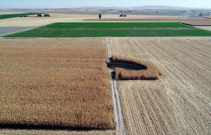 В Турции на кукурузном поле образовался провал (7)