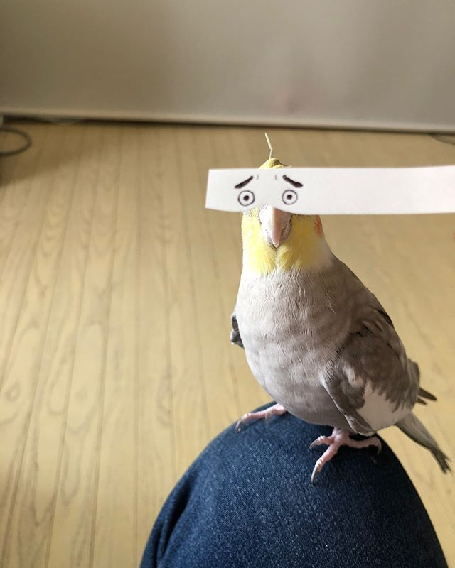 Добавь своему попугайчику эмоций (5)