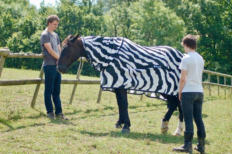 Надев на коней пальто, ученые показали, зачем зебрам полоски (1)