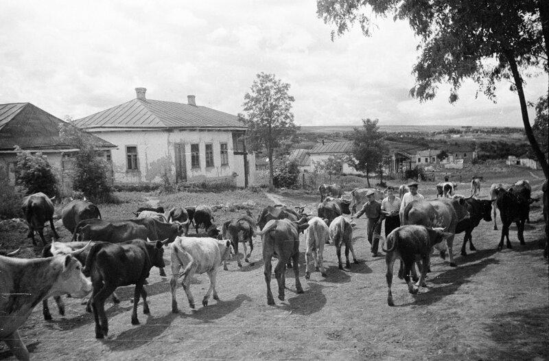Душевные фотографии советской деревни (12)