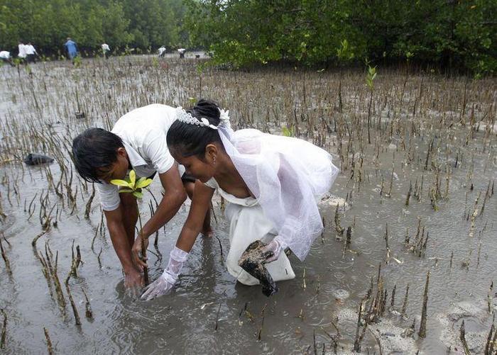Самые необычные места для свадьбы (5)