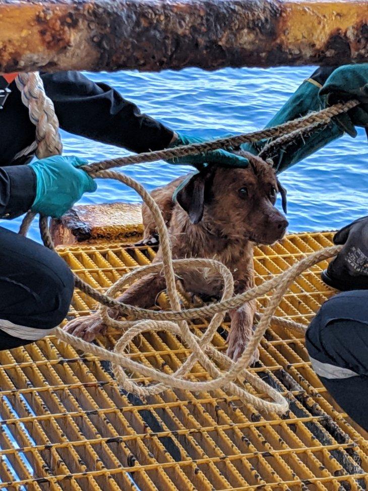 Рабочие буровой платформы спасли собаку (1)