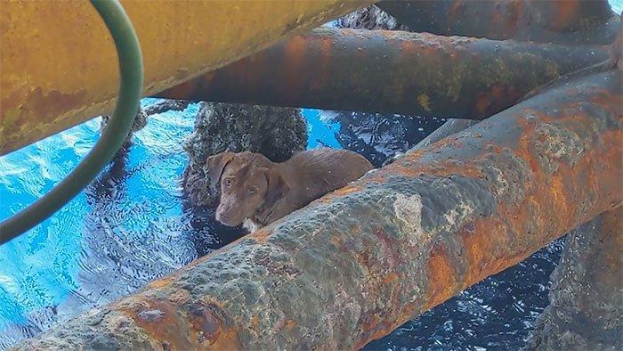 Рабочие буровой платформы спасли собаку (2)